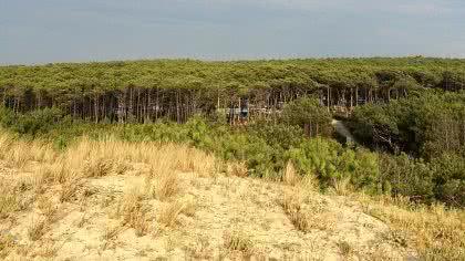 Camper im Wald, von der Düne aus gesehen
